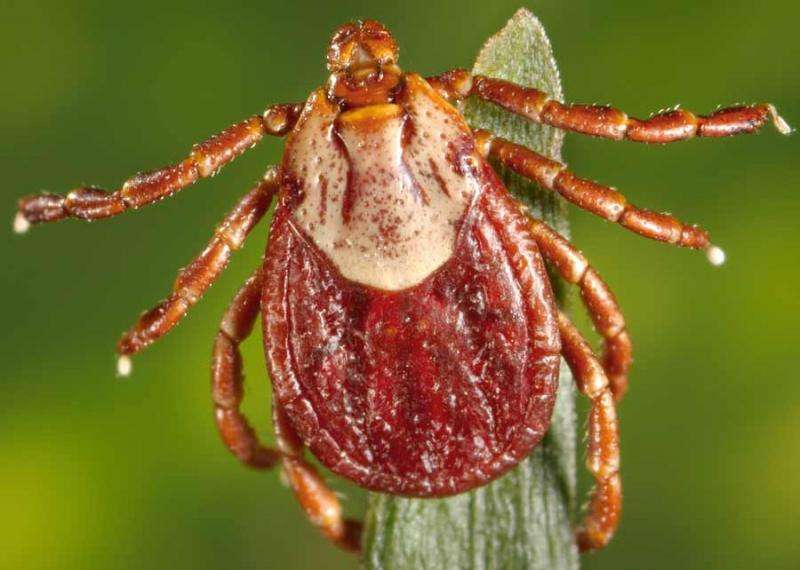 Entomological Society of America issues statement on tick-borne diseases