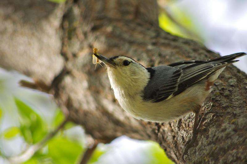 Environment, not distance, triggers genetic differences in 'sky island' birds