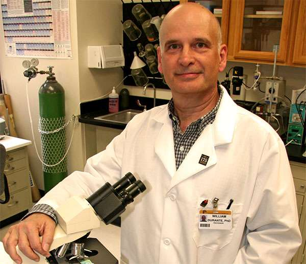 Enzyme responsible for obesity-related high blood pressure identified