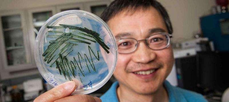 Ethylene production via sunlight opens door to future