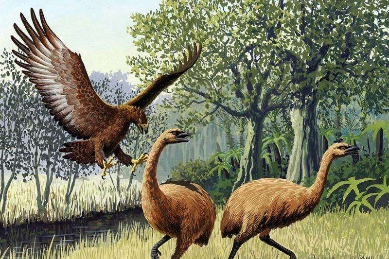 Extinct eagle and 'weaponised' weka brought to life digitally