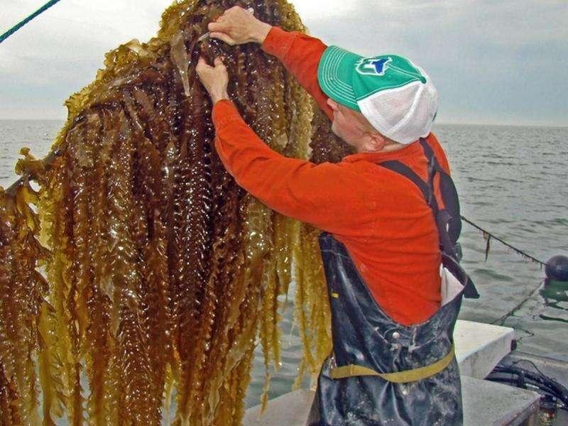 Farming the sea: Prize-winning model to restore ecosystems