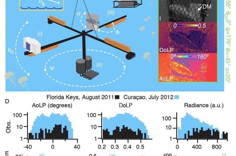 Fau harbor branch scientists discover new camouflage mechanism fish use in the open ocean