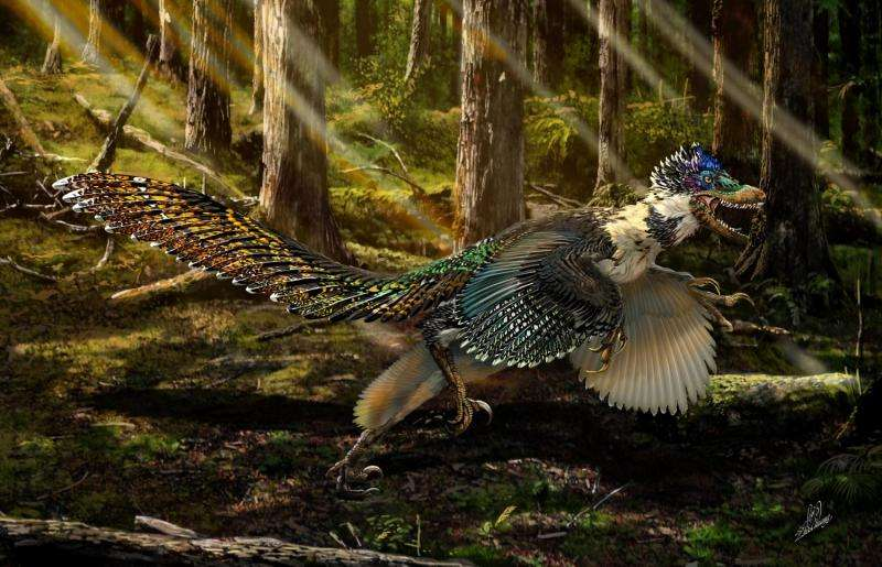 Feathered cousin of 'Jurassic Park' star unearthed in China