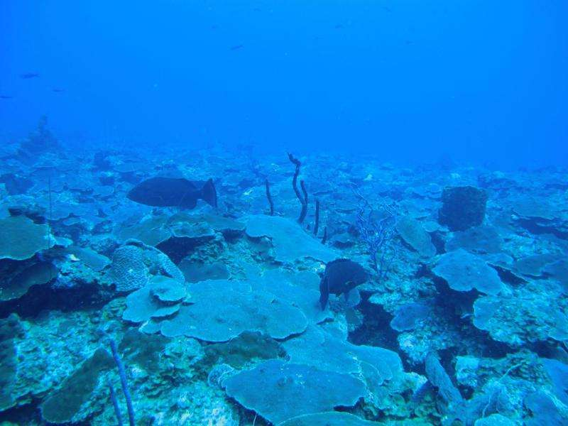 Fertile corals discovered in deeper waters off US Virgin Islands