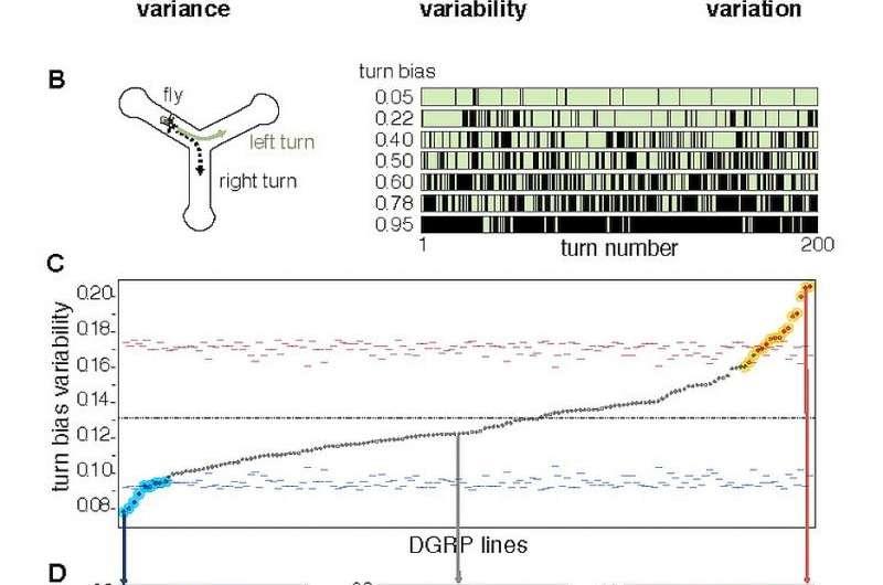 Figure 1. Intragenotypic variability of locomotor handedness varies across DGRP lines.
