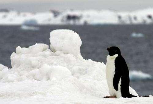 File photo of a penguin strolling past the King Sejong Korean station in Antartica