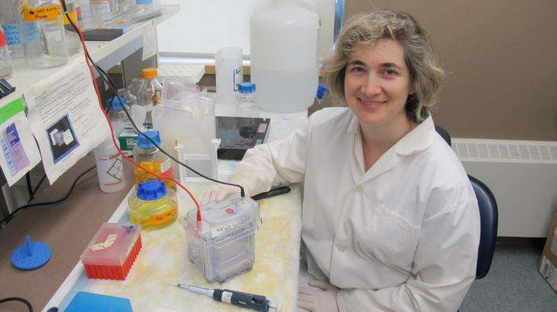 Finding a way forward in the fight against prion disease