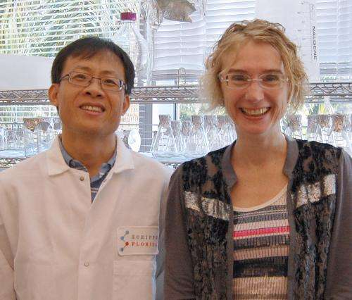 Finding points to possible mechanism underpinning Alzheimer's and Parkinson's diseases