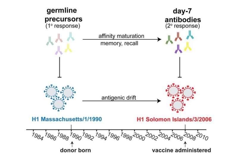 First flu exposure imprints itself on immune system