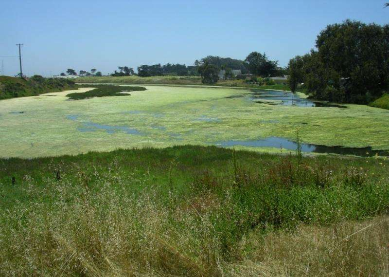 Fish declines linked to effects of excess nutrients on coastal estuaries