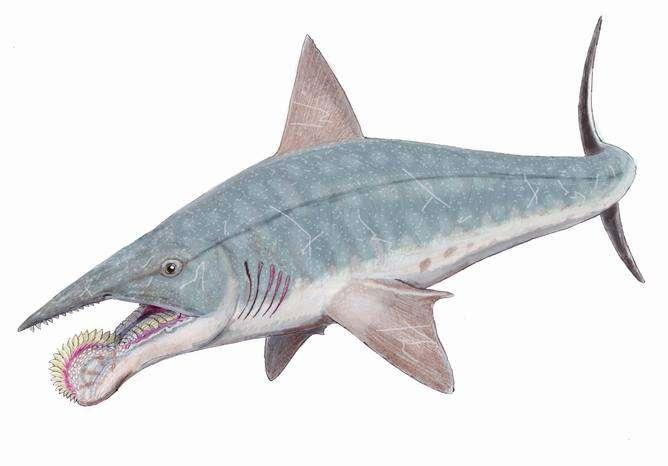 Five amazing extinct creatures that aren't dinosaurs