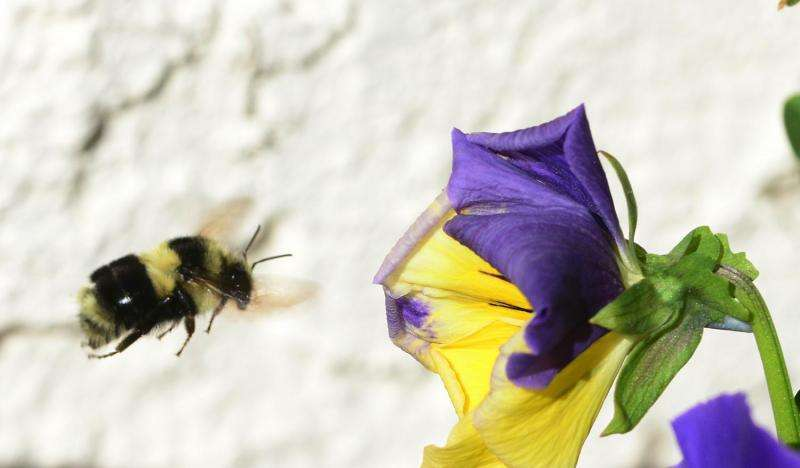 Flowers can endanger bees