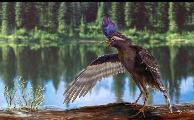 Fossil of world's earliest modern bird could help us understand the extinction of dinosaurs