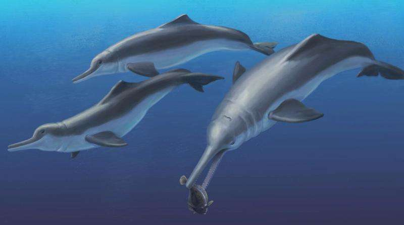 Fossil specimen reveals a new species of ancient river dolphin to Smithsonian scientists