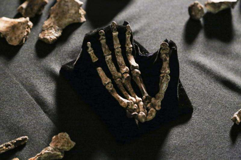 Fossil trove adds a new limb to human family tree