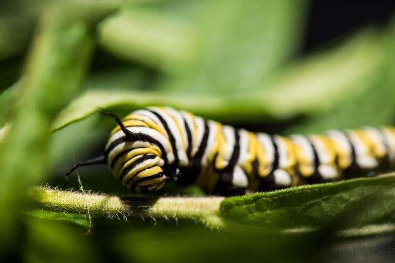 Four biological kingdoms influence disease transmission in monarch butterflies