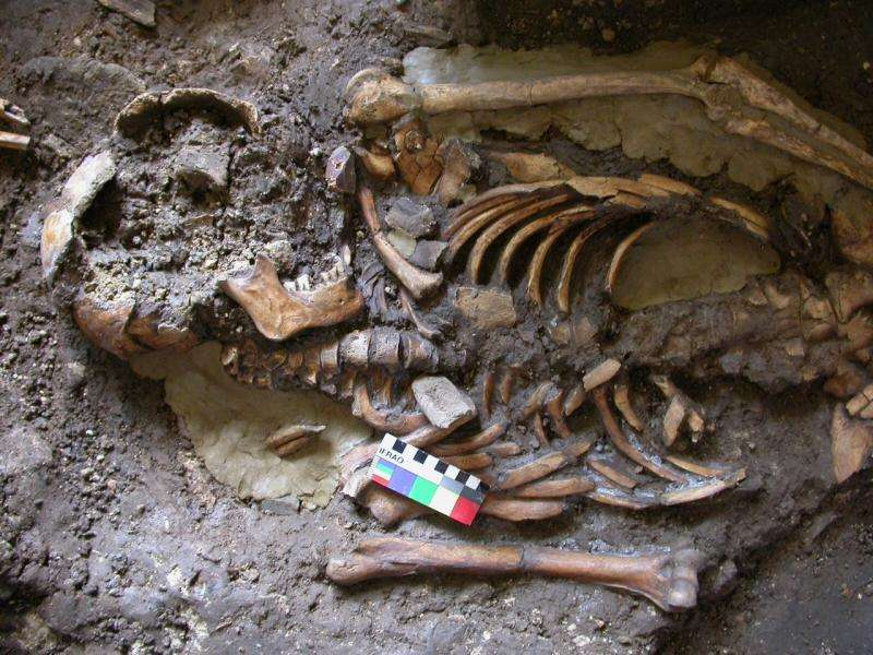 'Fourth strand' of European ancestry originated with hunter-gatherers isolated by Ice Age