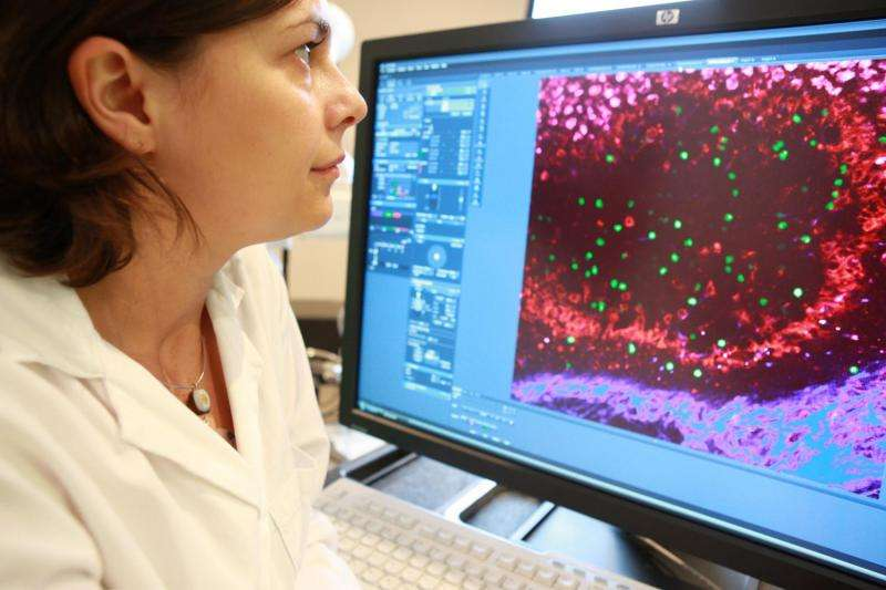 Frontline immune cells can travel for help