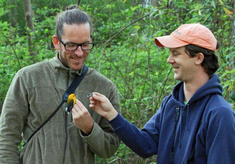 Geolocators used to link breeding and wintering populations of Prothonotary Warblers