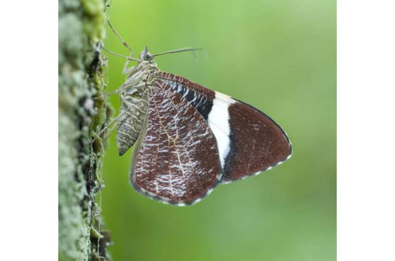 Get to know them faster: Alternative time-efficient way to describe new moth species
