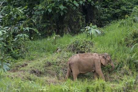 GIS study reveals preferred habitat of Asian elephant