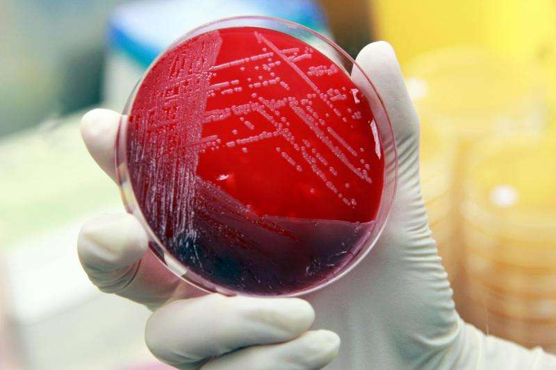 Global search for next antibiotic