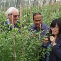 Growing crops in salty soils gets easier one step at a time