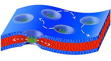 How natural channel proteins move in artificial membranes
