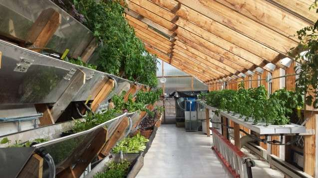 How sustainable is vertical farming?