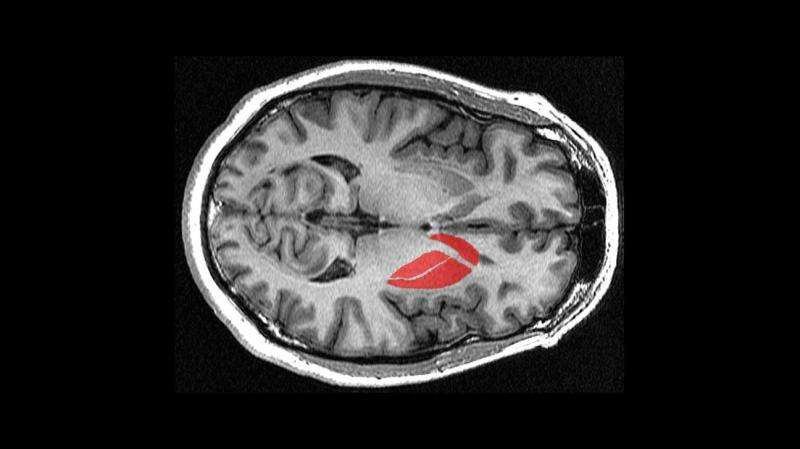 How the brain triggers action