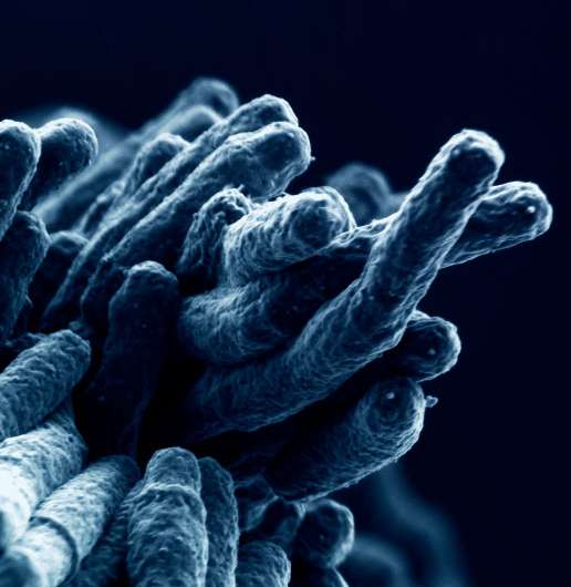 How the tuberculosis bacterium tricks the immune system