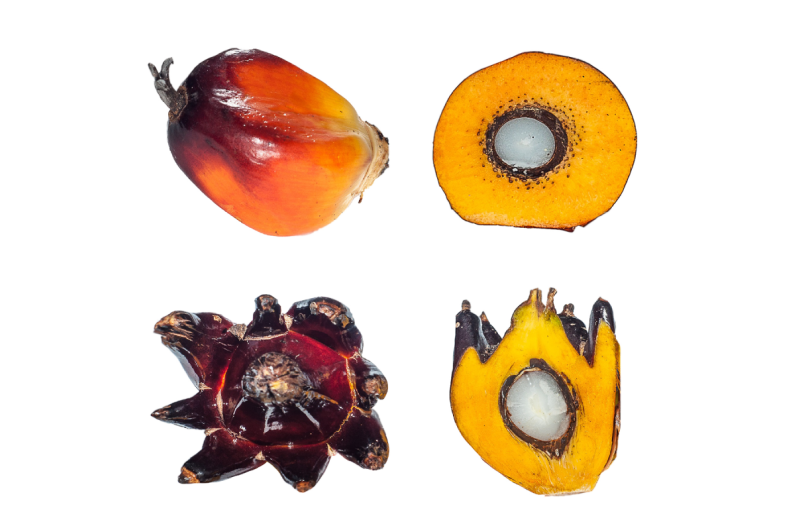 Hypomethylation of karma transposon causes catastrophic mantled epi-mutation in oil palm