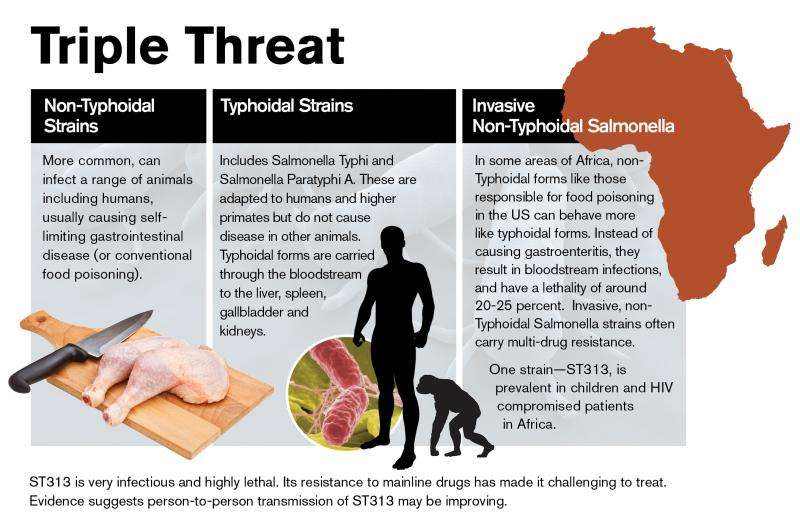 In Africa, a deadly salmonella strain takes hold