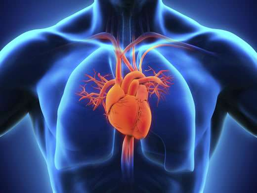 Increased arterial stiffness is superior to blood pressure in predicting cognitive decline in healthy individuals