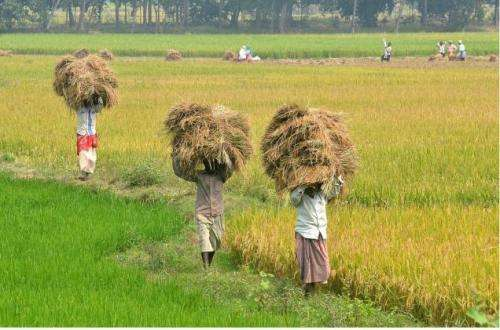 India's land modernisation policy takes toll on rural communities, according to research