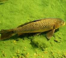 Invasion of non-native species exposed by environmental DNA