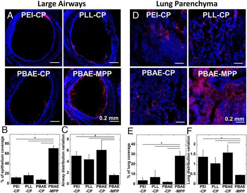 In vivo distribution of DNA-NPs following intratracheal administration