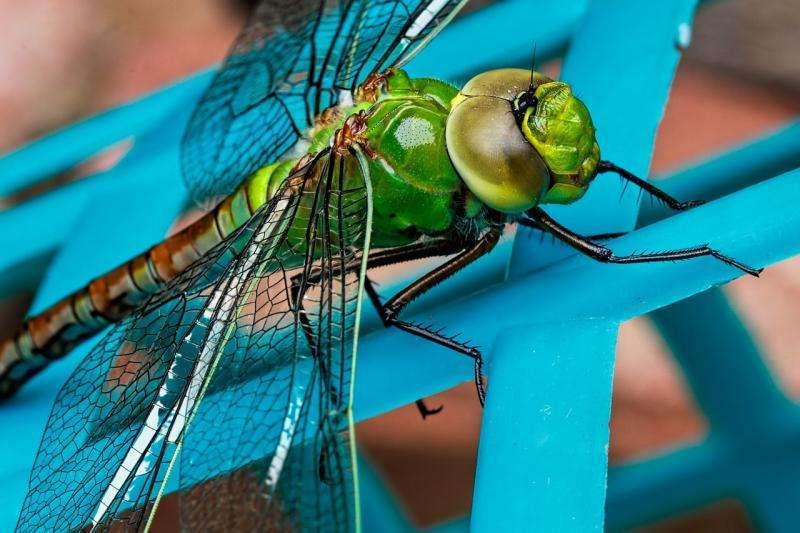 Iridescent animals shine to startle predators