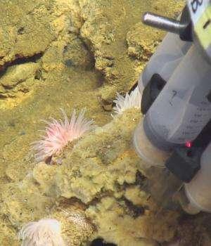 Iron-oxidizing bacteria found along Mid-Atlantic Ridge