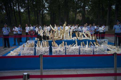 Ivory items are shown to the media before being destroyed in Beijing on May 29, 2015
