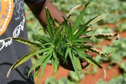 Jamaica official says marijuana reform bill ready