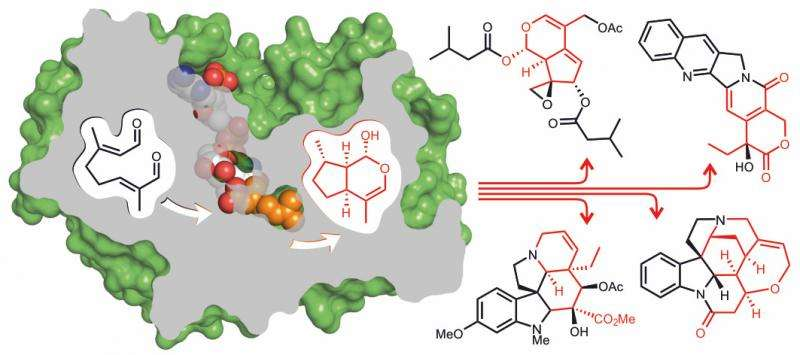 John Innes Centre scientists identify 3-D structure of enzyme critical to creation of anticancer compounds in plants