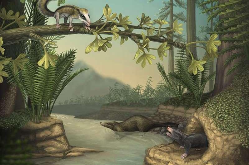 Jurassic saw fastest mammal evolution