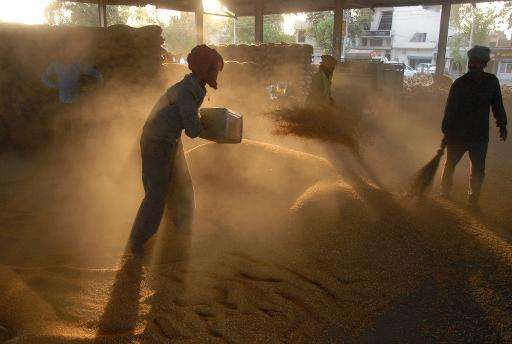 Labourers gather wheat grains from a thresher at a market