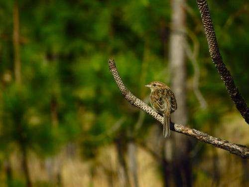 Landscape-level habitat connectivity is key for species that depend on longleaf pine