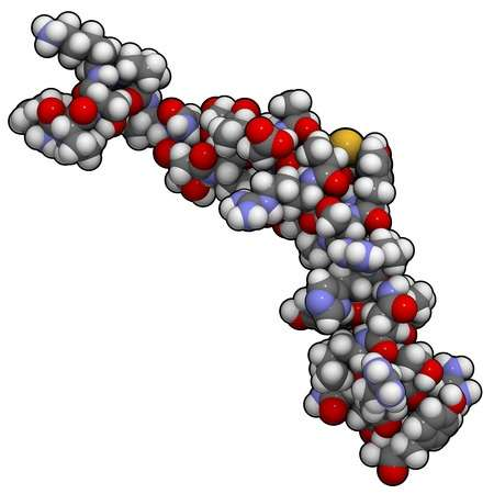 Life-prolonging protein could inhibit ageing diseases
