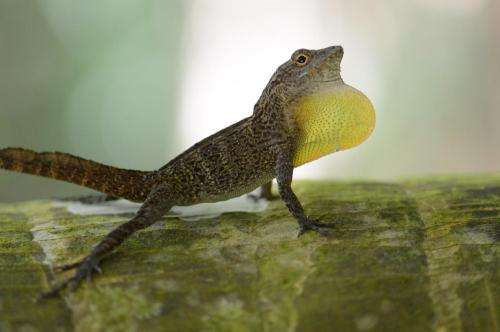 Lizard activity levels can help scientists predict environmental change