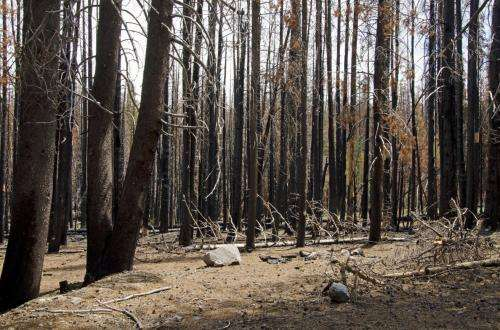 Long-term changes in dead wood reveal new forest dynamics