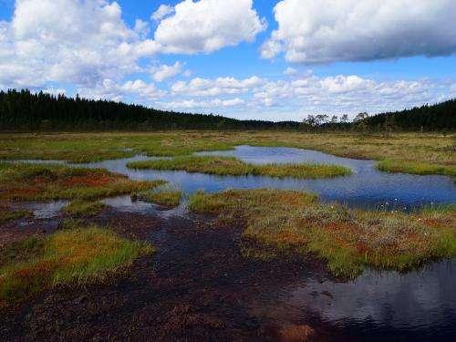 Management of peatlands has large climate impacts
